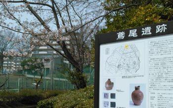 公園の桜0406-3.jpg